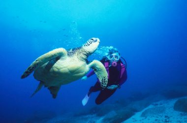 Queensland's whales and turtles to benefit from plastics ban