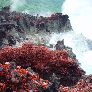 Crabs at Blowholes Christmas Island. Photo Christmas Island Tourism Assocation