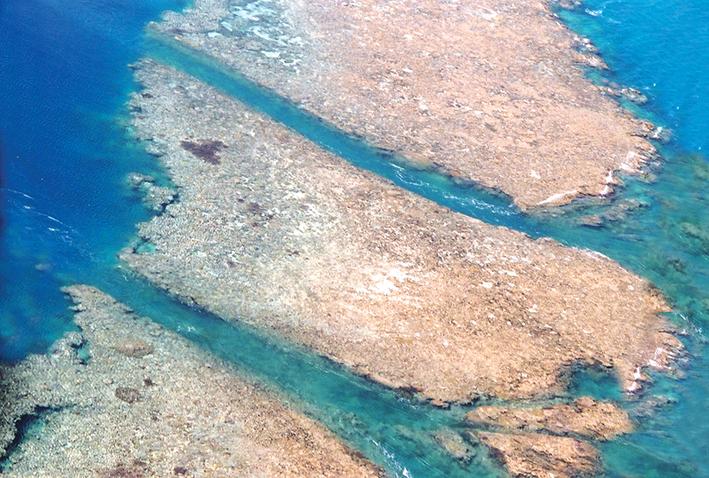 Great Barrier Reef hardy reef channels