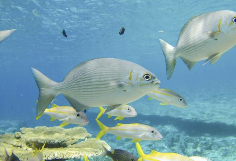 Australia takes huge steps forward to protect globally significant marine hotspots