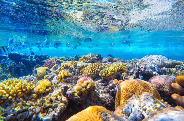 The Perfect Partnership for Reef Preservation