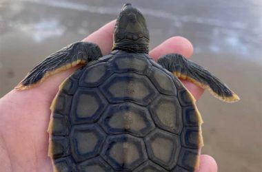 Queensland turtles the winners thanks to ban on plastic
