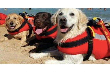 Lifesaver Dogs save 14 people in beach rescue