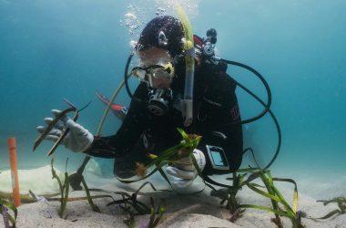 Doing Poseidon's work: citizen scientists help restore endangered seagrass